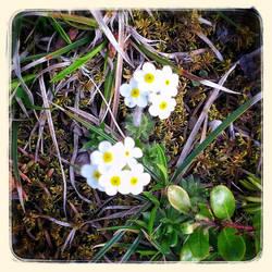 Wild Flowers VI by lunacatd