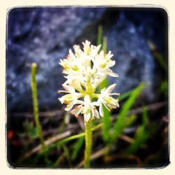Wild Flowers IV by lunacatd