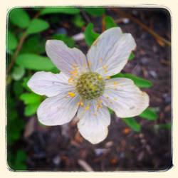 Wild Flowers II by lunacatd