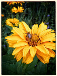 how my garden grows II by lunacatd