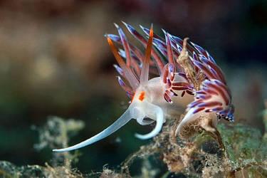 sea slug by carettacaretta