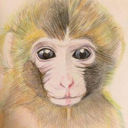 Monkey by kicku