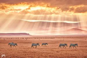 Ngorongoro Crater, Tanzania by SteveCampbell
