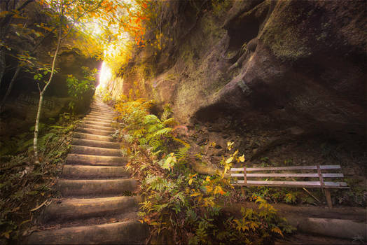 Autumn in the Blue Mountains by SteveCampbell