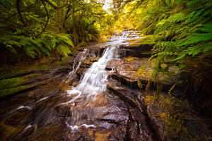 Leura Cascades, Blue Mountains, Australia by SteveCampbell