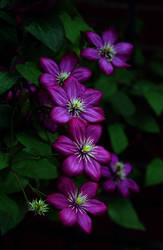 Flowers by cpmpics