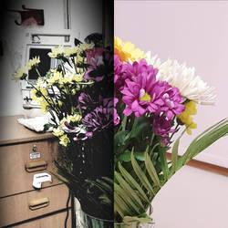 flowers  by fridolf49