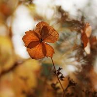 foretaste of autumn by AlicjaRodzik