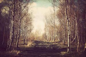 birchwood by AlicjaRodzik