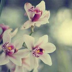 Miss Orchidea by AlicjaRodzik