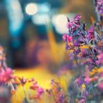 flowery by AlicjaRodzik