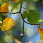 autumn alchemy by AlicjaRodzik