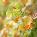 autumn alchemy II by AlicjaRodzik