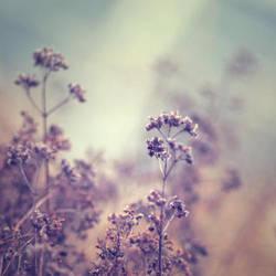 dream... by AlicjaRodzik