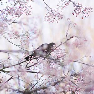 bird of my heart by AlicjaRodzik