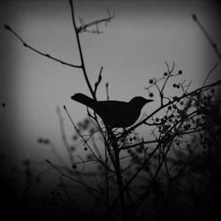 set me free... by AlicjaRodzik