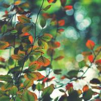 I'm a tree that grows hearts by AlicjaRodzik