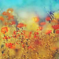 wisdom of bloom by AlicjaRodzik