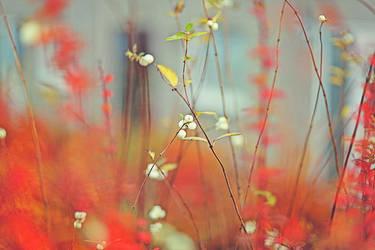 Autumn Poetry by AlicjaRodzik