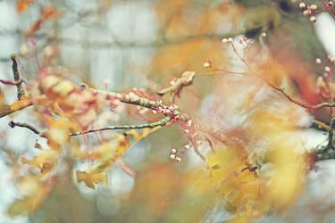 Autumn Poems by AlicjaRodzik