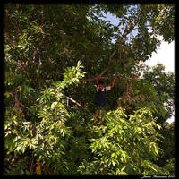 Guyana 2009 - Day 198 by jmbroscombe