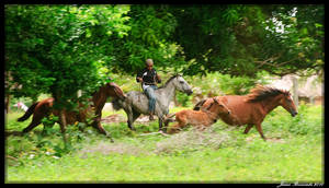 Guyana 2010 - Day 364 by jmbroscombe