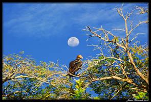 Guyana 2010 - Day 379 by jmbroscombe