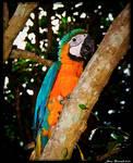 Guyana 2010 - Day 511 by jmbroscombe