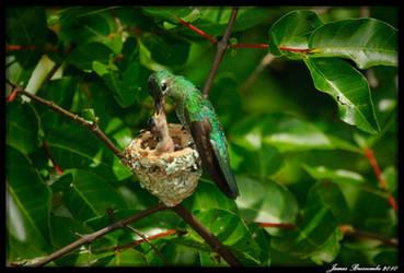 Guyana 2010 - Day 515 by jmbroscombe