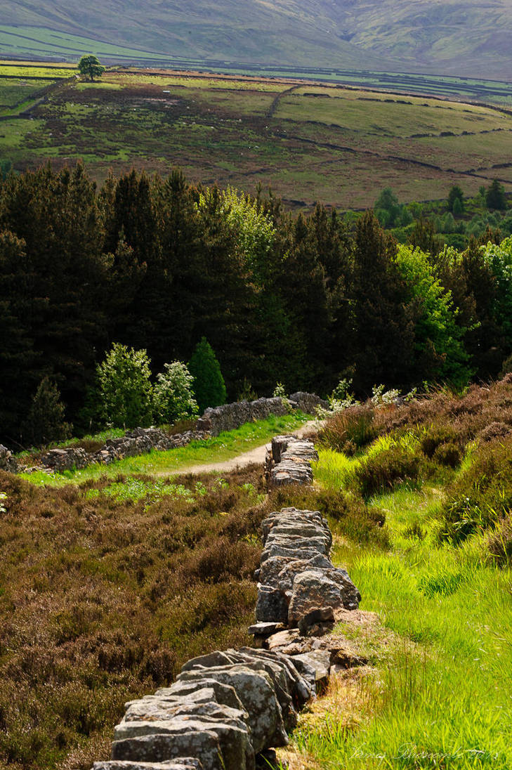 The path to Digley by jmbroscombe