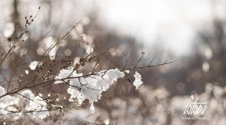 Winter by Tiefenbacher