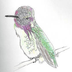 Hummingbird by Areodus