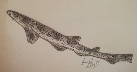 Small-spotted Catshark by ArminReindl