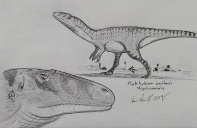Poekilopleuron: Happy Birthday Hotshot Raptor by ArminReindl