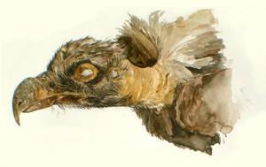 Field Museum: Vulture by KlakKlak