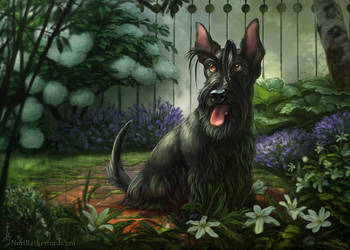 Scottish Terrier by KlakKlak
