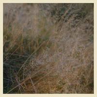 magic grass by a-sullen-girl