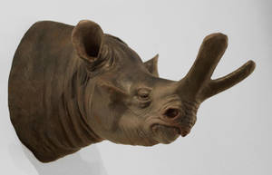 Megacerops medium Head and Neck by OBissex