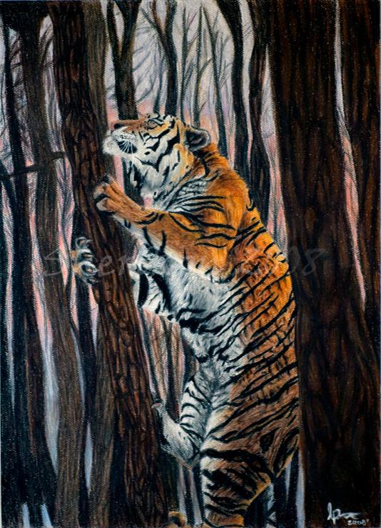 Climbing Tiger by sherikon