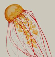 Jellyfish by iloveyoustitch