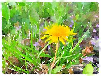 Dandelion by asommersby