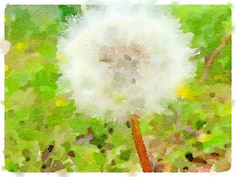 White Dandelion - Watercolor by asommersby