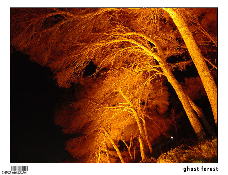ghost forest by insektokutor