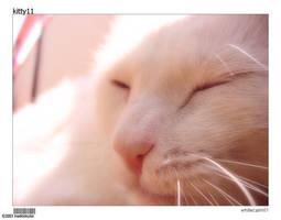 kitty11-whitecalm01 by insektokutor