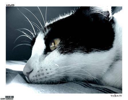 kitty09-sadness by insektokutor