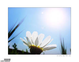 a sunny day for you by insektokutor