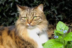 Posh Cat by rotellaro