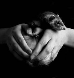 Ferret Love by xelasminin