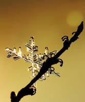 snowflake by efeline