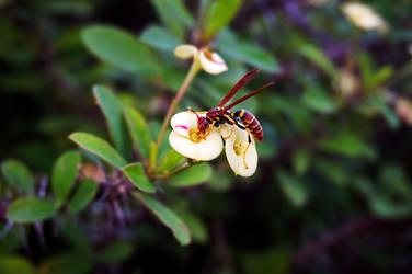 Wasp on Flower by byfrankiec